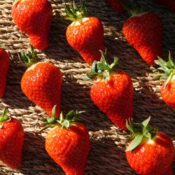 fraises alpilles